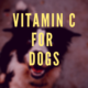 Is Vitamin C Good for Dogs?